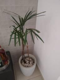 Título do anúncio: Vaso bege com palmeira ráfia