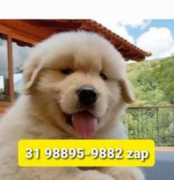 Título do anúncio: Filhotes Cães Pet BH Golden Dálmata Pastor Akita Rottweiler Labrador