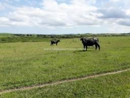 Fabio Paes Imóveis - Fazenda 333 alq para 3.000 bovinos - Plana