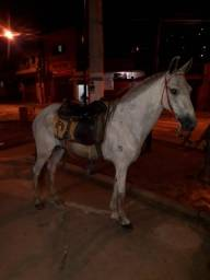 Vendo cavalo fenômeno na macha picada