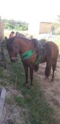 Cavalo mestiço de mm