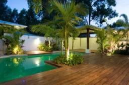 Muda de palmeira havai