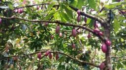 Fazenda com 200 ha na região de Marau - Bahia
