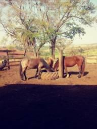 Cavalos a venda barato