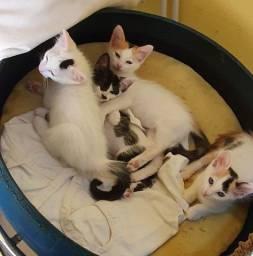 Título do anúncio: Adoção responsável de gatinhos