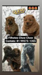 Título do anúncio: Filhotes de Chow Chow