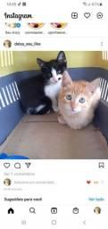 Título do anúncio: Gatos Doa se