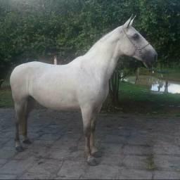 Oportunidade!!! Egua MM e Cavalo pra criança