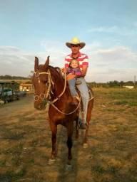 2 Cavalo