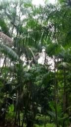 50 hectares em santa izabel porr 170 mil zap *
