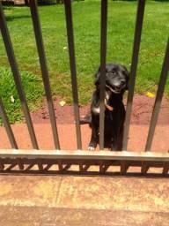 Doação cachorra sem raça