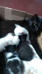 Gatinhos lindos pra doação