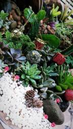 Mini jardim, para presentear nesse natal, faça seu pedido.