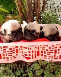 Título do anúncio: Filhotes de Pug