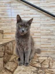 Título do anúncio: Gatos para adoção responsável - URGENTE!