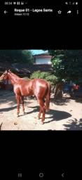 Título do anúncio: Vendo Cavalo- PSI- urgente
