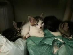 Estou doando esses lindos gatinhos