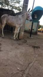 Urgente burro