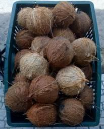 Coco seco 1,00