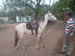 Vendo Cavalo Mangalarga Machador