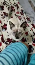 Gato adoção