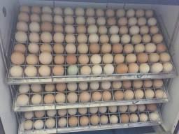 Ovos caipira galados