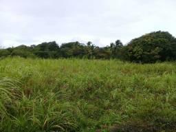Vende-se campi elefante