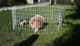 Cercado Para Pets