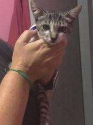 Gatinho filhote mansinho muito fofo