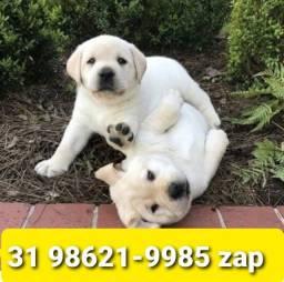 Título do anúncio: Filhotes Cães Diversas Raças BH Labrador Golden Akita Boxer Pastor Rottweiler