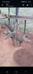 Título do anúncio: Tronco de árvore - ideal para criador de cobras, corujas e passaros