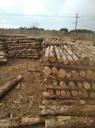 Título do anúncio: Teca Reflorestamento