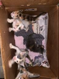 Título do anúncio: Doação de gatos filhote