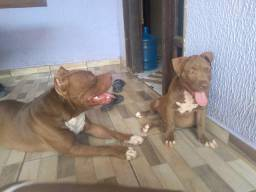 Pit Monster 3 meses