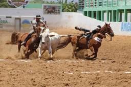 Cavalor de vaquejada de direita