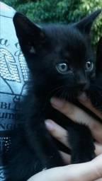 Doa-se gatinhos pretos em Anápolis