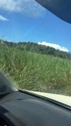 Permuto 410 alqueires,por 90% Região SP,São José Rio Preto pecuária, Fazenda emMato Grosso