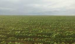 Fazenda 180 alqueires, 123 alqueires de lavouras