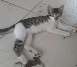 Adoção consciente lindos gatinhos