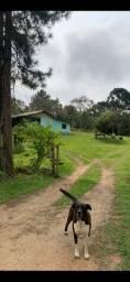 Chácara linda - Tijucas do Sul