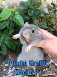 Twister ratinho