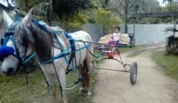 Cavalo marchado e bom de charrete anda 50 por hora na charrete