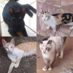 Gatinhos castrados para adoção