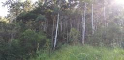 Vendo roça de eucalipto em pé. Ribeirão grande Pínda.