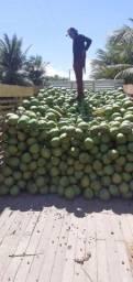 Venda de coco verde