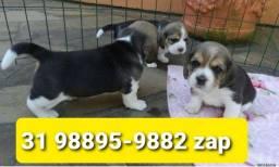 Título do anúncio: Filhotes Selecionados Cães BH Beagle Yorkshire Maltês Basset Shihtzu Lhasa