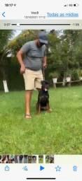 Título do anúncio: Rottweiler filho de importados
