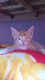 Título do anúncio: Doa-se um gatinho de 1 mês.