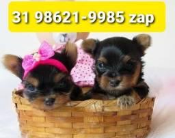 Título do anúncio: Cães Maravilhosos Filhotes BH Yorkshire Maltês Beagle Lhasa Shihtzu Basset
