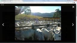 Fazenda juparana de Almenara MG para Jequitinhonha no km 30